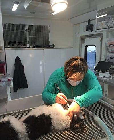Dr. Dixon examining a pet's teeth: Mobile Pet Hospital in Rennselaer