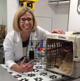 Our Mobile Vet with a Cat in Rensselaer, IN