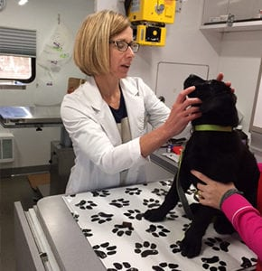 Mobile Pet Exam in Rensselaer